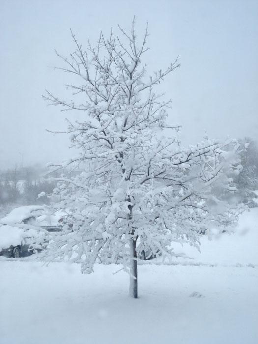 برف سردشت